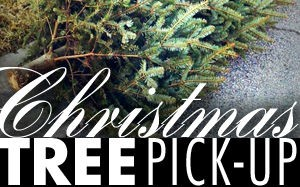 Image result for christmas tree pick up